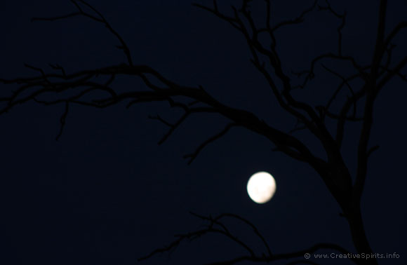Leafless tree against a bright moon.