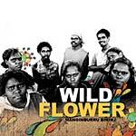 Wildflower - Manginburru Bininj